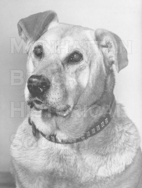 Old George, the downtown post office mascot. Old George began his service in 1938 at the third post office at 1020 Manhattan and died in 1954 at the fourth post office at 1142 Manhattan Ave.