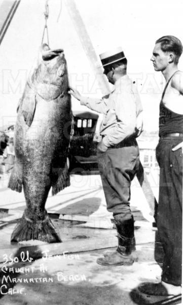A black sea bass weighing 350 pounds was caught from the Manhattan Beach Pier by Mr. Blandford (with Hat).