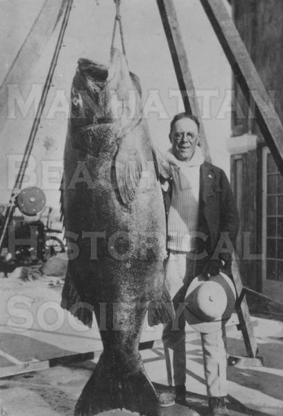 A black sea bass weighing 351 pounds was caught from the Manhattan Beach Pier by C.C. Campus on May 15, 1922.